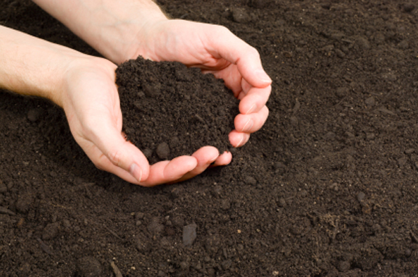 Everything You Need to Know About Topsoil