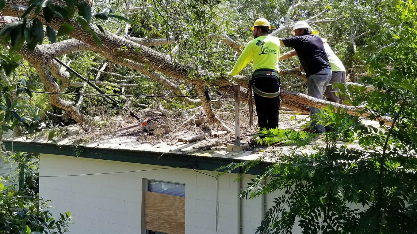 Oahu Tree Trimming and Removal